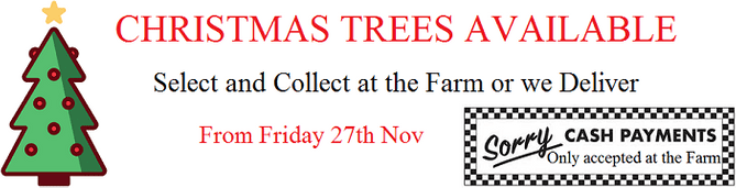 christmas trees available